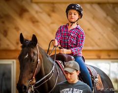Show day-33 (Webbed Foot Photo) Tags: horses horse pennsylvania ponycamp webbedfootphotography pentaxk1 opengateranch darrenolsen dtolsen webbedfootphoto hunterhillsfarm