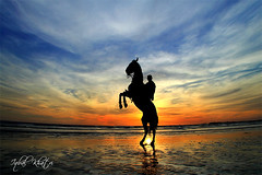 Prancing Horse (Iqbal.Khatri) Tags: travel winter pakistan sunset horse seascape public place images east getty middle karachi wrath sindh fury seaview exasperation prancing iqbal khatri seaviewkarachi gettyimagespakistanq12012 gettyimagesmiddleeast