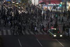 (quashlo) Tags: tokyo neon taxi shibuya  intersection  crosswalk scramble    shibuyastation   tokyoprefecture  shibuyaward
