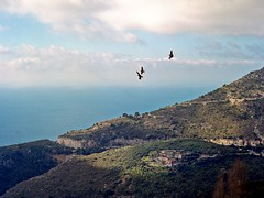 Sur Les Hauteurs de Eze (Fabrice Drevon) Tags: road light sea cloud mountain mamiya film home zeiss village seagull perspective jena processing fujifilm 1000s 80mm biometar m645 pn160ns fabricedrevon