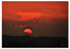 Non il solito Tramonto...di pi! / Not the usual Sunset ... more! (G.hostbuster (Gigi)) Tags: trees sunset red sun birds animals silhouette alberi fly tramonto ducks uccelli volo sole rosso lombardia animali controluce ghostbuster anatre gigi49 barcklight