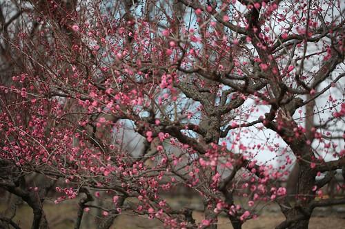 風景~春 Spring