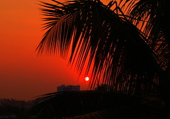 Dawn - Sunrise over a Coconut Tree - #22102011-PA224516c (photographic Collection) Tags: morning red sky sun india tree sunrise dawn golden coconut oct olympus photographic collection hour ap coconuttree e300 365 rise hyderabad andhra goldenhour 22nd pradesh evolt andhrapradesh 2011 sarma kalluri mygearandme photographiccollection bheemeswara bkalluri bheemeswarasarmakalluri