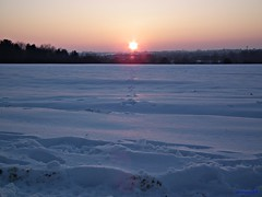 Snowy Sunset (Steve.T.) Tags: winter sunset snow fuji tracks footprints essex hs10 littlebraxted