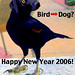 """dog bird • <a style=""""font-size:0.8em;"""" href=""""http://www.flickr.com/photos/75066368@N04/6900806093/"""" target=""""_blank"""">View on Flickr</a>"""