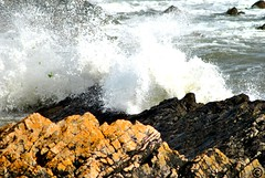 Port Eynon (Kerys Davies) Tags: ocean sea seaweed beach southwales seaside sand rocks gower rockpools porteynon