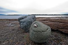 NANOOSE BAY  (18) (DESPITE STRAIGHT LINES) Tags: sea canada seaweed beach water nikon bc britishcolumbia shoreline tamron straitofgeorgia nanoosebay d700 nikond700 tamron1024mm privatebeachrocks ilobsterit