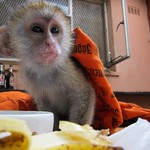 More Monkey Business - I'm his new Dad