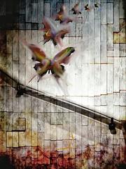 I Have Seen (Jay_Harvey) Tags: iris bw white black art fashion collage tattoo canon vintage butterfly square photography nikon jay grafitti mr grunge lofi banksy harvey format brainwash palladium 4s iphone dolk iphoneography hipstamatic instagram snapseed