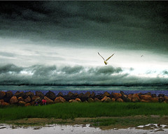 Auspex (Bill Sargent) Tags: ocean family boy summer people storm man bird art beach rain animal photoshop canon children photography photo child capecod massachusetts scenic photograph cape cod sargent coldbrook coldbrookstudio