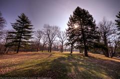 Morning Shadows (MattPenning) Tags: park morning trees leaves sunshine shadows pentax sigma potd pines pinetrees lincolnpark k5 springfieldillinois latewinter mattpenning kmount prespring sigma1020mmf456exdc mattpenningcom penningphotography justpentax pentaxk5