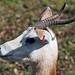 National Zoo_2012 03 04_0161