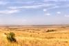 Masai Mara #2 (Roantrum) Tags: tanzania day kenya savannah serengeti masaimara mf12 roantrum pwpartlycloudy