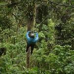 """BIO 245: Ecology of Ecuador<a href=""""http://farm8.static.flickr.com/7206/6996073160_9b1784ca69_o.jpg"""" title=""""High res"""">∝</a>"""