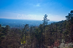 Leith hill (justyourcofchi) Tags: wood uk blue trees england sky sun tower history nature sunshine forest woodland point landscape countryside spring high model woods flickr photographer view hill national trust leith chiarnold justyourcupofchicom justyourcupofchi