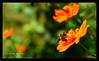 ওলি বার বার ফিরে আসে ওলি বার বার ফিরে চায়......... (Shahnoor Shawon ( শাহ্নূর শা) Tags: goldenbee fbdg