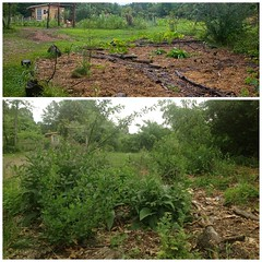 Food Forest (Geek in the garden) Tags: food forest homestead permaculture