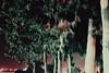 DSC_0773 (Mashael88) Tags: pictures flowers black mountains flower tree love nature beauty logo photography lights photo flickr photographer darkness mesh farm theend m moment charming شمس ahmed saudiarabia mash pandemonium the photograghy جمال تصوير ذكريات طبيعي تصويري السعودية اشجار مزرعة ظلام ساحر طبيعه مجموعة نبات مزرعه لحظات فوتوغرافي enchantingbeauty احتراف مشاعل mashael ميش فوتوغرافية تصويرفوتوغرافي فوتوغرفي mashae theeffectof مشاعلاحمد mashaelahmed مصورفتوغرافي النخلتان مطارالرياض ،mashael،mashael ahmed،photo مسش thebeautyofdocile شجرشروق اشياءالشمس الطيبعه