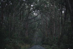 "The Otway Forest • <a style=""font-size:0.8em;"" href=""http://www.flickr.com/photos/48037351@N08/13901529287/"" target=""_blank"">View on Flickr</a>"