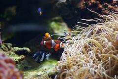 IMGP7561 (pistachoo) Tags: fish vancouver work aquarium marine fieldtrip stanleypark vancouveraquarium jq