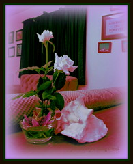 Flowers from my garden- art edit (young eclectic images) Tags: flowers roses white home garden passionflower conchshell myfrontyard artedit