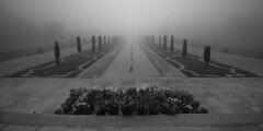 @ Agra, UP (Kals Pics) Tags: travel flowers trees plants india mist love monument water weather fog architecture garden wonder landscape temple mood pov perspective tajmahal agra landmark roi shahjahan cwc uttarpradesh mumtaz lordshiva goddessparvati rootsofindia kalspics chennaiweelendclickers