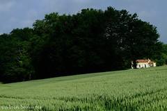 """"""" La maison dans les bls """" (alain.beauvois62) Tags: cereales"""