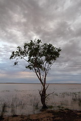 IMG_1452 (Melissa Macgill) Tags: cloud tree lakes stormy outback sa southaustralia coongie