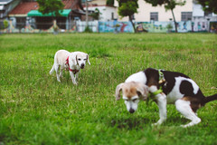 how dare you in my territory (MissingBeagle) Tags: canon eos m3 ef 50mm f12 l usm