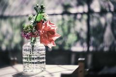 Cuando el sol se asoma a la ventana... (Claudia Pino) Tags: flores luz contraluz atardecer ventana 50mm colombia bokeh retrato bodegn rosas jardn rayosdesol canon6d claudiapino