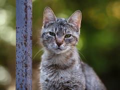 Street cat 145 (Yalitas) Tags: pet cats cat canon kat feline chat kitty gato felino katze katzen kot kedi kass gatta streetcat kotka  kocka  katte  katzchen kottur