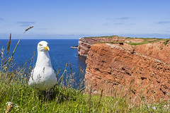 Helgoland and Seagull (Helmut Wendeler aus Hanau) Tags: seagull helmut mwe helgoland wendeler