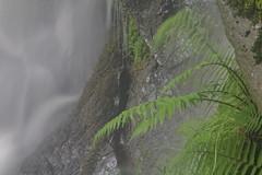 Parque natural de #Gorbeia #Orozko #DePaseoConLarri #Flickr -124 (Jose Asensio Larrinaga (Larri) Larri1276) Tags: 2016 parquenatural gorbeia naturaleza bizkaia orozko euskalherria basquecountry