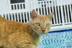 Gato (Tato Avila) Tags: animal cat agua colombia bigotes colores ojos gato felinos girardot ojosazules clido