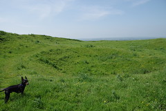 Arthur's Well (Lil Shepherd) Tags: somerset landscape cadbury hillfort