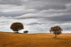 (Antonio Carrillo (Ancalop)) Tags: winter españa cloud cold tree field canon de landscape arbol la spain europa europe cloudy paisaje murcia filter cruz nubes campo l 5d invierno lonely nublado mm lopez antonio 70200 frio f4 minimalist solitario carrillo graduated markii minimalista caravaca gnd8 ancalop