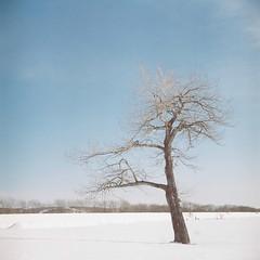 Alone (_kaochan) Tags: snow 6x6 japan hokkaido kodakportra400 rolleiflexautomat