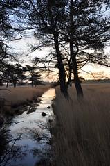 Sun up (jpockele) Tags: green nature spring groen natuur lente kalmthout kalmthoutseheide