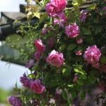 """2009-06-07_BOG_065 <a style=""""margin-left:10px; font-size:0.8em;"""" href=""""http://www.flickr.com/photos/76178133@N08/6835738152/"""" target=""""_blank"""">@flickr</a>"""