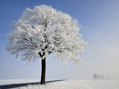 freezing fog (pierre hanquin) Tags: blue trees winter light sky sun snow color colour tree nature colors field landscape geotagged nikon europa europe colours belgium belgique couleurs hiver champs belgi bleu ciel arbres fields neige blau paysage landschaft arbre couleur lige wallonie 1685 hannut 1685mm d7000 1685mmf3556gvr magicunicornverybest magicunicornmasterpiece fleursetpaysages mygearandme mygearandmepremium mygearandmebronze mygearandmesilver mygearandmegold mygearandmeplatinum mygearandmediamond ringexcellence dblringexcellence tplringexcellence eltringexcellence hanquin