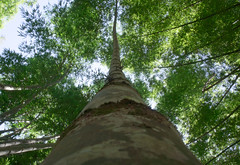 Bambuuuuuuuuuuuu (pglomba) Tags: park parque brazil nature rio brasil riodejaneiro digital forest garden rj sony paisagem jardim botanico arvore tronco floresta árvore nex sonynex