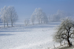Weidenbachtal (dorena-wm) Tags: blue schnee winter light white mist snow tree fog fence licht nebel blau zaun weiss baum 2012 dunst oberland weidenbachtal dorenawm eberfing