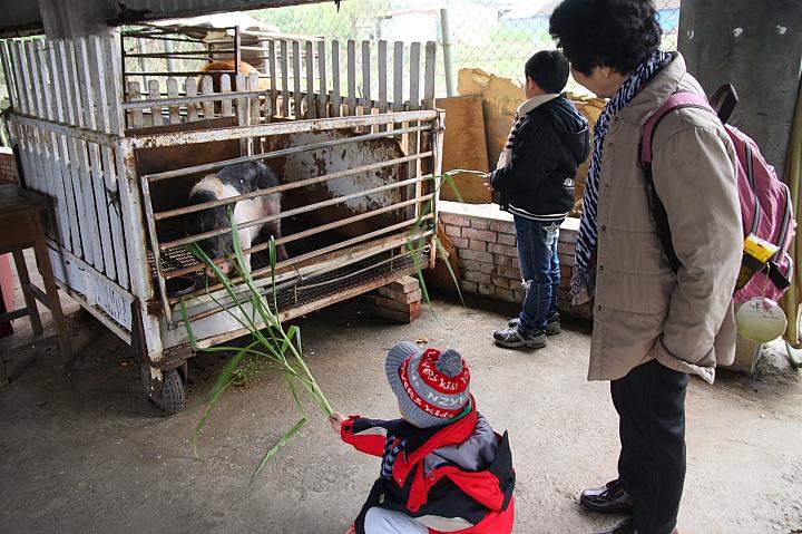 可達休閒羊場0046