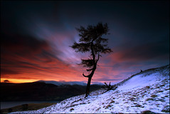 Larch Tree Dawn Loch Tay (angus clyne) Tags: morning light red sky mountain lake snow storm tree art pine forest canon print dawn climb scotland long exposure wind ang