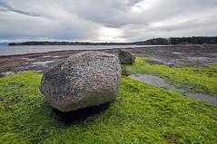 NANOOSE BAY  (10) (DESPITE STRAIGHT LINES) Tags: sea canada seaweed beach water nikon bc britishcolumbia shoreline tamron straitofgeorgia nanoosebay d700 nikond700 tamron1024mm privatebeachrocks ilobsterit