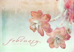 An febrero ... (Maril Irimia) Tags: flowers winter flores garden nikon textures invierno february febrero texturas jardn softtones psedition oltusfotos tonossuaves marilirimia marilirimiafotografa edicinps editandocontexturas