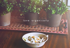 Love Organically (Sara Jennifer Panza) Tags: life new old flowers autumn trees light summer portrait color fall love window nature kitchen colors beautiful beauty leaves canon vintage happy photography salad spring vines pretty photographer artistic fashionphotography michigan sinister vibrant gorgeous detroit hipster dream vivid eerie lightleak meme fairy faded mysterious dreamy desaturated conceptual hazy spiritual suave oldfashioned classy 50mm18 colorfulleaves t2i tumblr detroitphotographer canon5dmarkii sarajenniferpanza