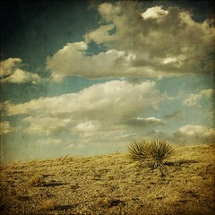 the couple (jssteak) Tags: sky clouds canon vintage square colorado afternoon shadows pebbles aged plains hdr yucca textured pawneenationalgrasslands pawneebuttes t1i applesandsisters
