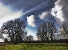 Some trees, some clouds (Wim Koopman) Tags: blue trees winter sky holland netherlands dutch grass weather clouds canon river photography photo stock nederland meadow powershot rhine rijn stockphoto s90 waal merwede stockphotography s100 wpk s95 avelingen