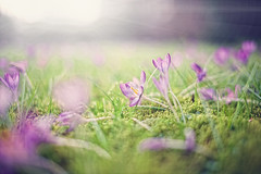 A touch of spring II (c.r.photoholic) Tags: green germany deutschland 50mm colorful foto bokeh mark 14 hamburg u1 grn creamy blende barmbek alterteichweg farbspiel sigma5014 5dmarkii kremig